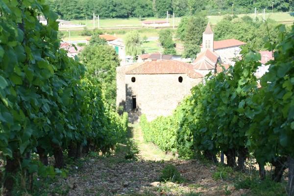 Vignes Domaine Duport Joseph 01150 Vaux en Bugey